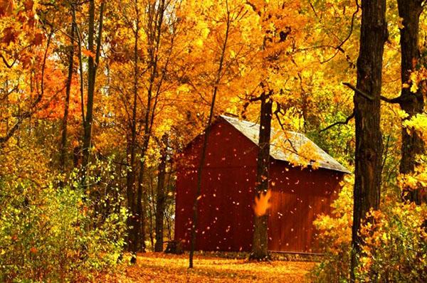 Casa en el bosque otoñal