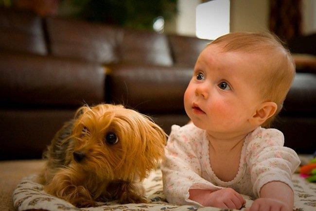 Bebés y mascotas en el hogar