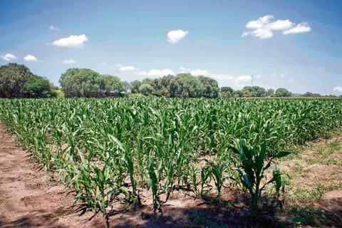 Soluciones y consejos para el control de plagas en el cultivo