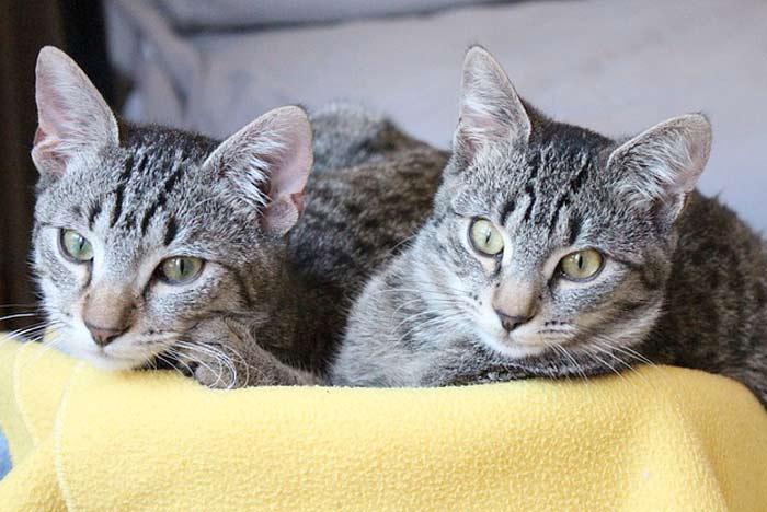 De gatos que nos despiertan de madrugada